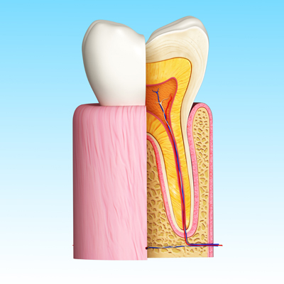 teeth_process